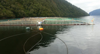 Gas generators provide continuous power for salmon farms in Chile